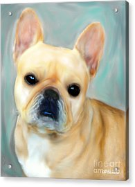French Bulldog Mystique D'or Acrylic Print by Barbara Chichester
