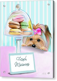 French Macarons Acrylic Print by Catia Cho