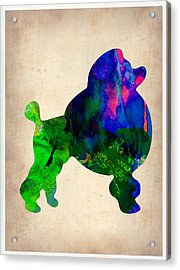 French Poodle Watercolor Acrylic Print by Naxart Studio