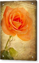 French Rose Acrylic Print by Kim Andelkovic