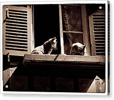 French Windowsill Cats In The Sun Acrylic Print