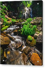 Fresh And Free Flowing Acrylic Print