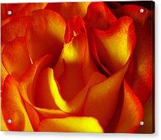 Fresh Bloom Acrylic Print by Tom Druin