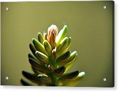 Fresh Blossom Acrylic Print