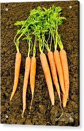 Fresh Carrots Acrylic Print