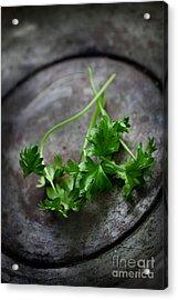 Fresh Celery Acrylic Print by Mythja  Photography