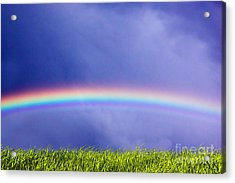 Fresh Grass And Sky With Rainbow Acrylic Print by Michal Bednarek