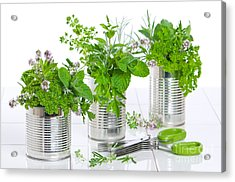 Fresh Herbs In Recycled Cans Acrylic Print by Amanda Elwell