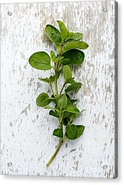 Fresh Oregano Acrylic Print by Nailia Schwarz