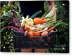 Fresh Organic Vegetables Acrylic Print