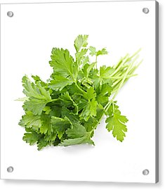 Fresh Parsley Acrylic Print by Elena Elisseeva