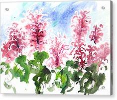 Fresh Pick No.382 Acrylic Print by Sumiyo Toribe