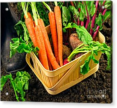 Fresh Picked Healthy Garden Vegetables Acrylic Print by Edward Fielding