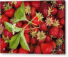 Fresh Picked Strawberries Acrylic Print