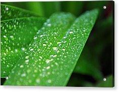 Fresh Rain Drops Acrylic Print