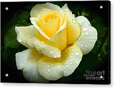 Fresh Sunshine Daydream Rose Acrylic Print