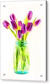 Fresh Tulips Acrylic Print by Darren Fisher