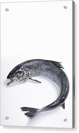 Fresh, Wild Caught, Coho Salmon Acrylic Print by Inti St. Clair