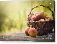 Freshly Harvested Apples Acrylic Print by Mythja  Photography