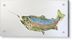 Freshwater Rainbow Trout With Fly Acrylic Print