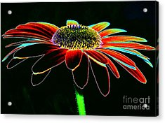 Friday Night Daisy Acrylic Print