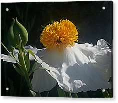 Fried Egg Poppies In The Air Acrylic Print by Suzy Piatt