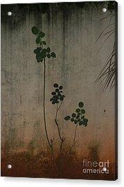 Friendless Rose Bush Acrylic Print by Mini Arora