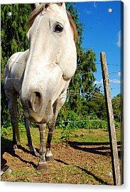 Friendly Horsey Acrylic Print by Mamie Gunning