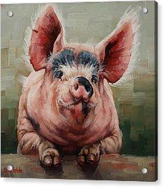 Friendly Pig Acrylic Print