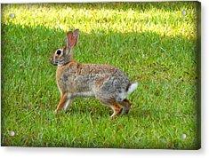 Friendly Rabbit I Acrylic Print by Lynn Griffin