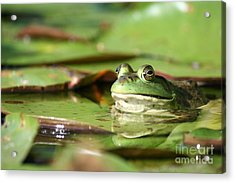 Friendly Roseland Lake Frog  Acrylic Print by Neal Eslinger
