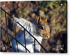 Friendly Squirrel Acrylic Print