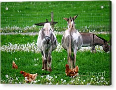Friends Acrylic Print by Dawn  De Vos