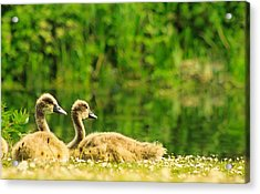 Friends For Life Acrylic Print