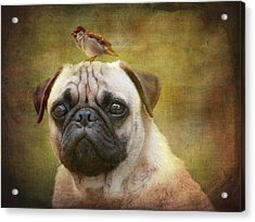 Friends Like Pug And Bird Acrylic Print by Barbara Orenya