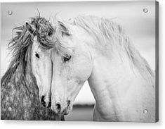 Friends V Acrylic Print by Tim Booth