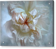 Friendship Is The Breathing Rose Acrylic Print by Louise Kumpf