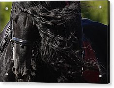 Acrylic Print featuring the photograph Friesian Beauty D8197 by Wes and Dotty Weber