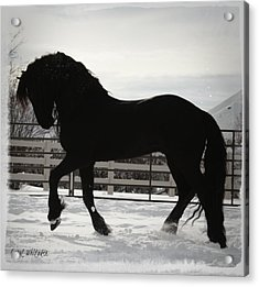 Friesian Play Acrylic Print