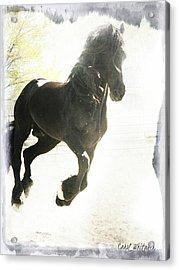 Friesian Spirit Acrylic Print