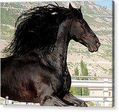 Friesian Stallion Spirit Acrylic Print