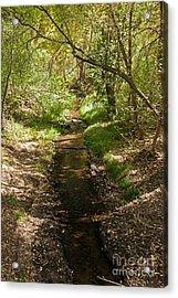 Frijole Creek Bandelier National Monument Acrylic Print
