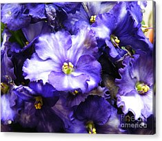 Frills Included Acrylic Print