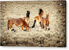 Frisky Mustangs Acrylic Print by Yeates Photography