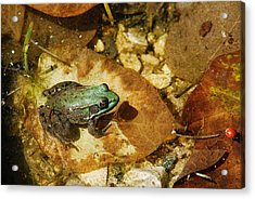 Frog And A Ladybug Acrylic Print by Janice Adomeit