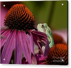 Frog And His Cone Acrylic Print