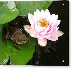Frog And Lily Acrylic Print by Debbie Finley