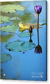 Acrylic Print featuring the photograph Frog And Lily by Ellen Cotton