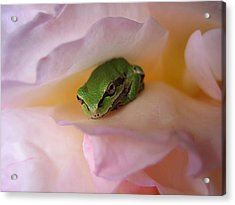 Frog And Rose Photo 2 Acrylic Print by Cheryl Hoyle