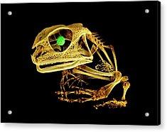 Frog Acrylic Print by Dan Sykes/natural History Museum, London